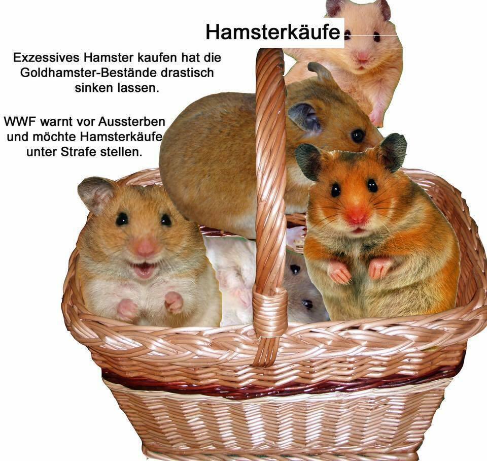 Nachrichten Hamsterkäufe